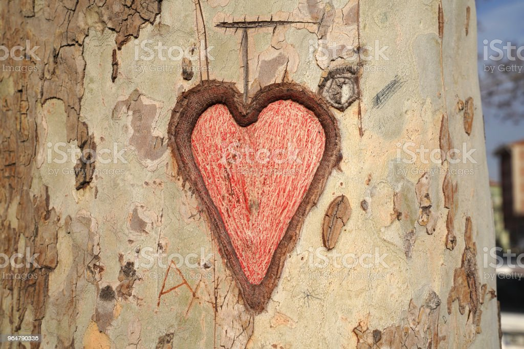 Heart carved in tree trunk royalty-free stock photo
