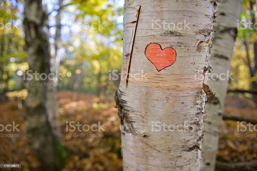 Heart carved into a tree along a forest path stock photo