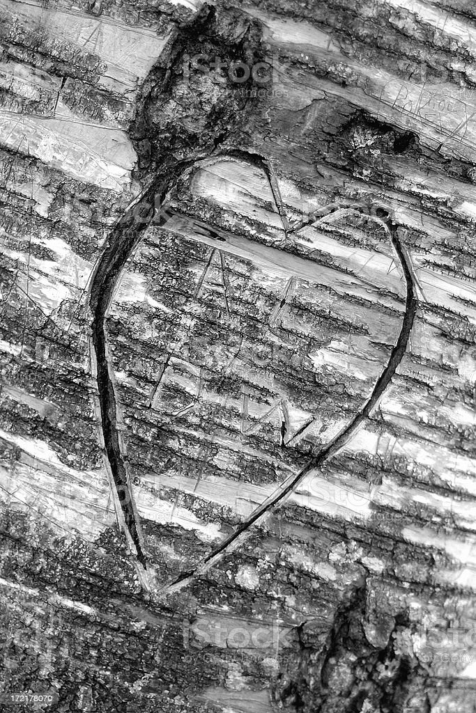 Heart Carved Into Tree royalty-free stock photo