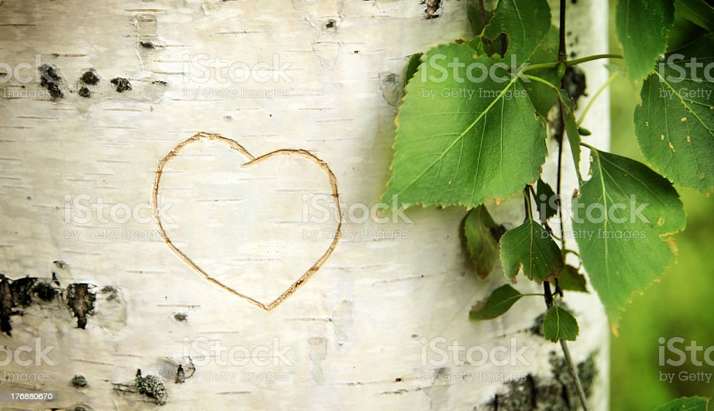 Heart curved on a birch stock photo