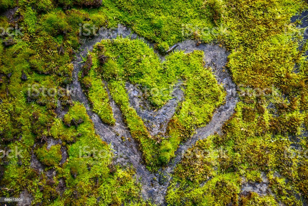 Heart Drawn in Moss at Cape Disappointment State Park stock photo