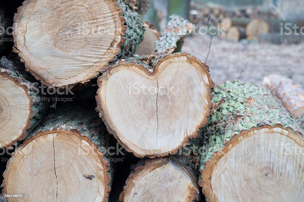 Heart from tree trunk. stock photo