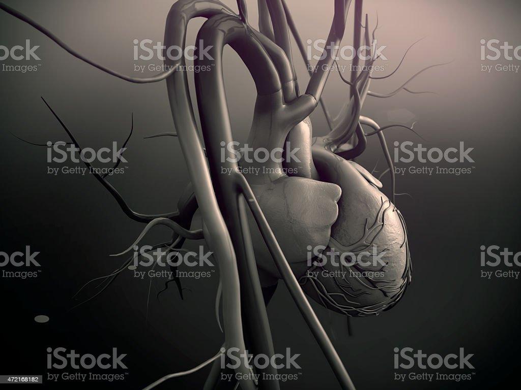Coração, coração humano - foto de acervo