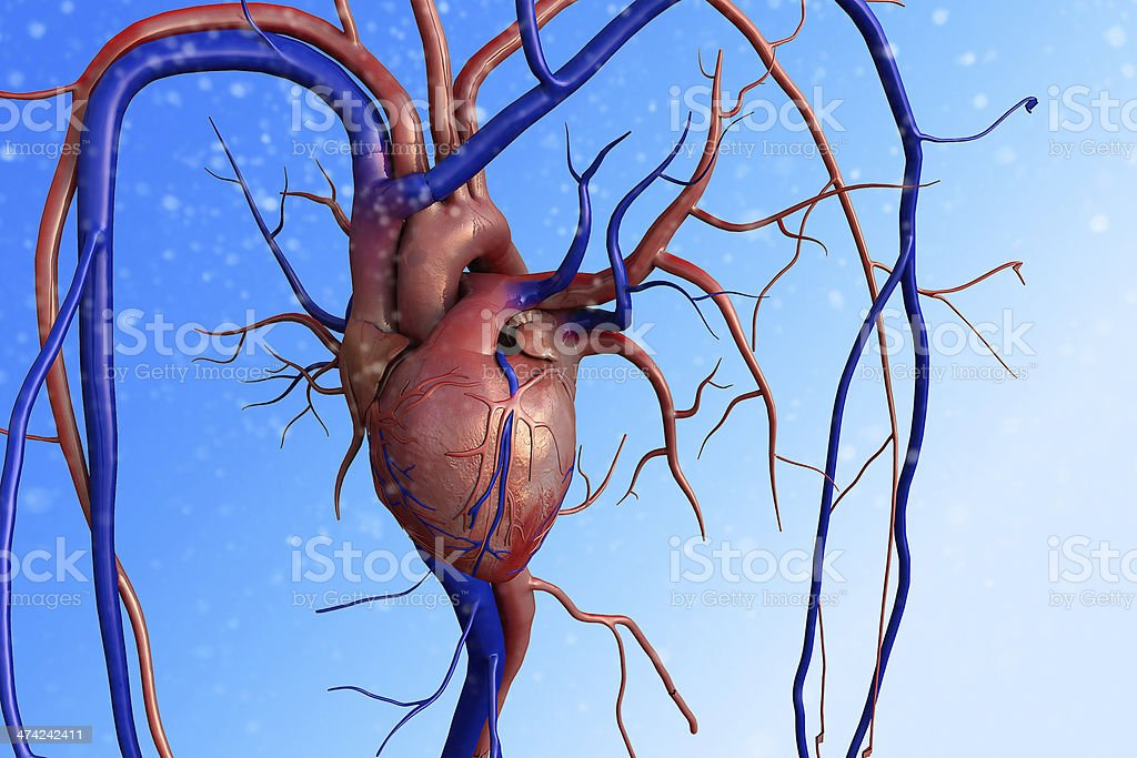 heart, Human heart stock photo