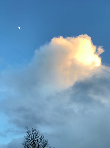 Natural white cloud with a heart shape ablaze with late afternoon sunshine in a blue sky with a small white half moon and tree top