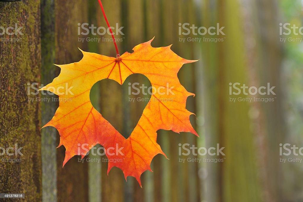 Herz im Herbst leaf – Foto