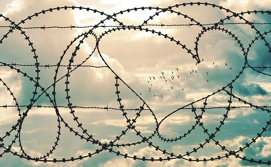 Heart in barbwire frames flock of birds in cloudscape background