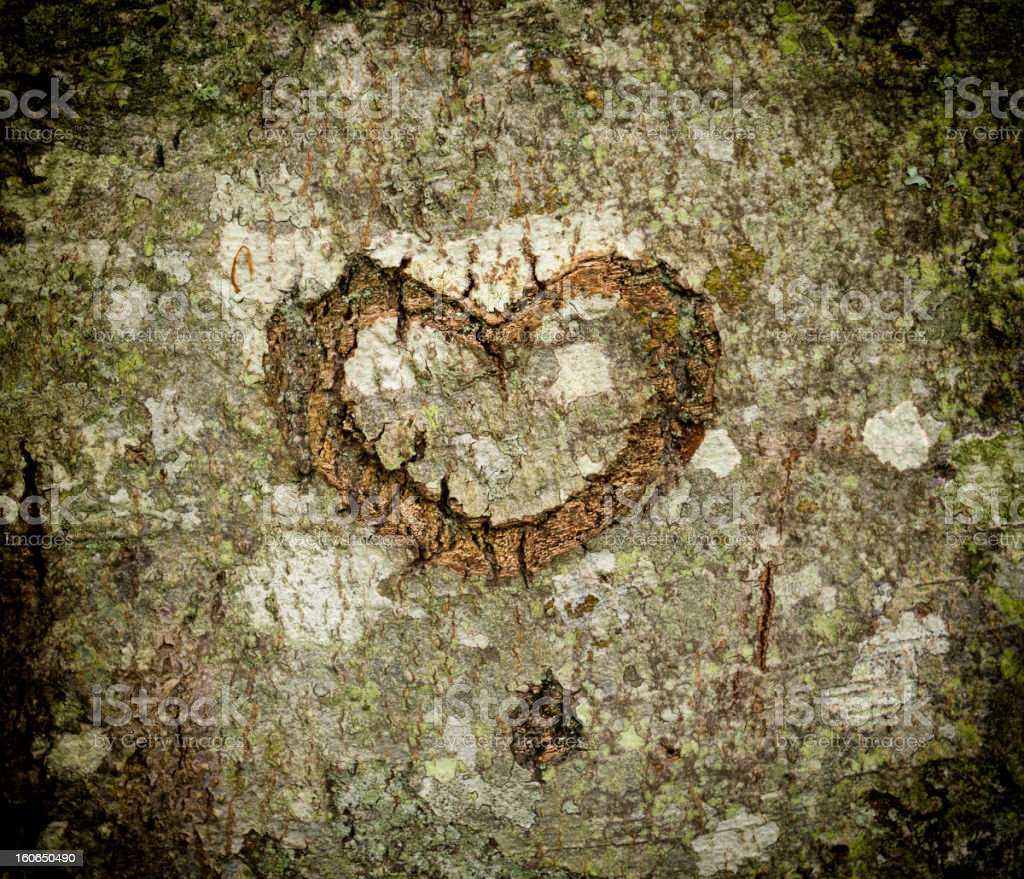 Heart in tree bark royalty-free stock photo
