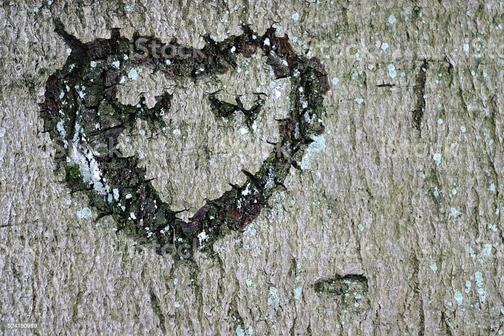 Heart incised in the bark of a tree stock photo