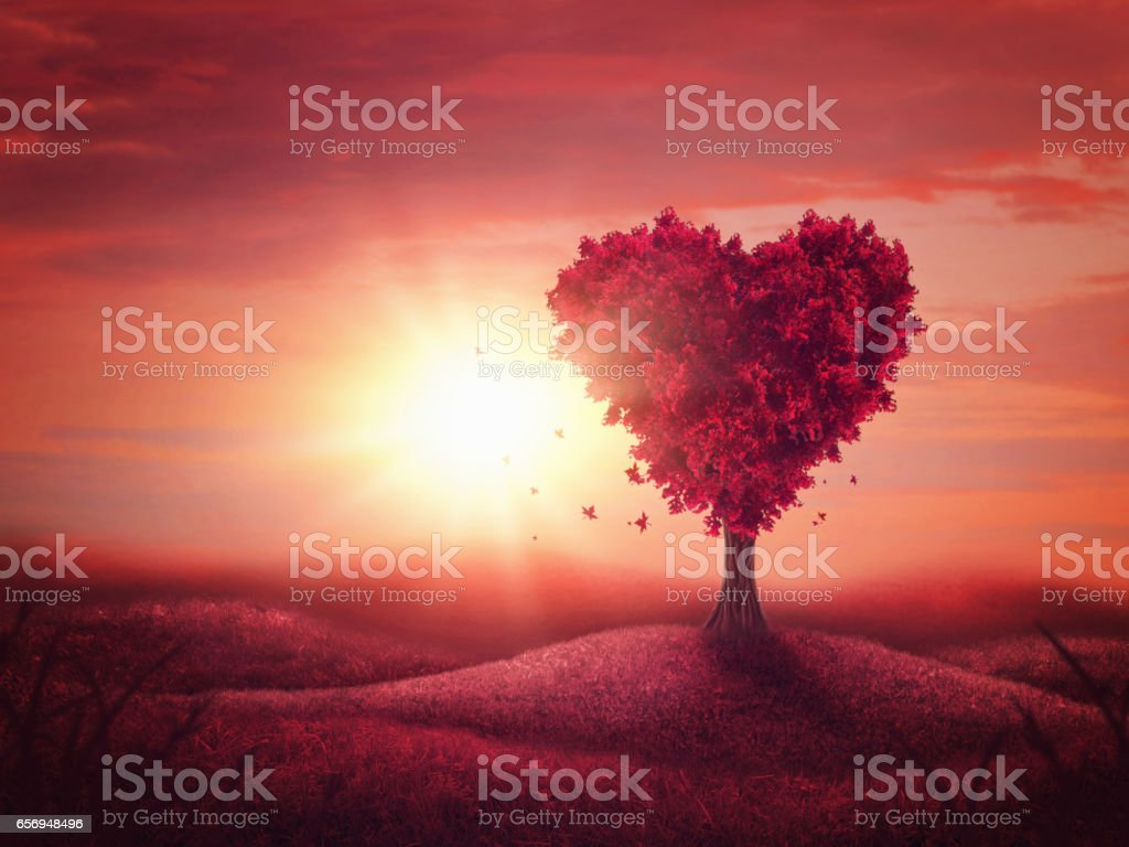 Heart love tree stock photo