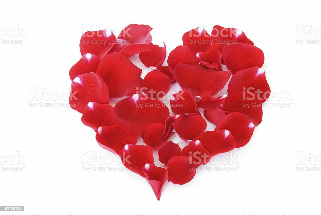 Heart made from red rose petals on white royalty-free stock photo