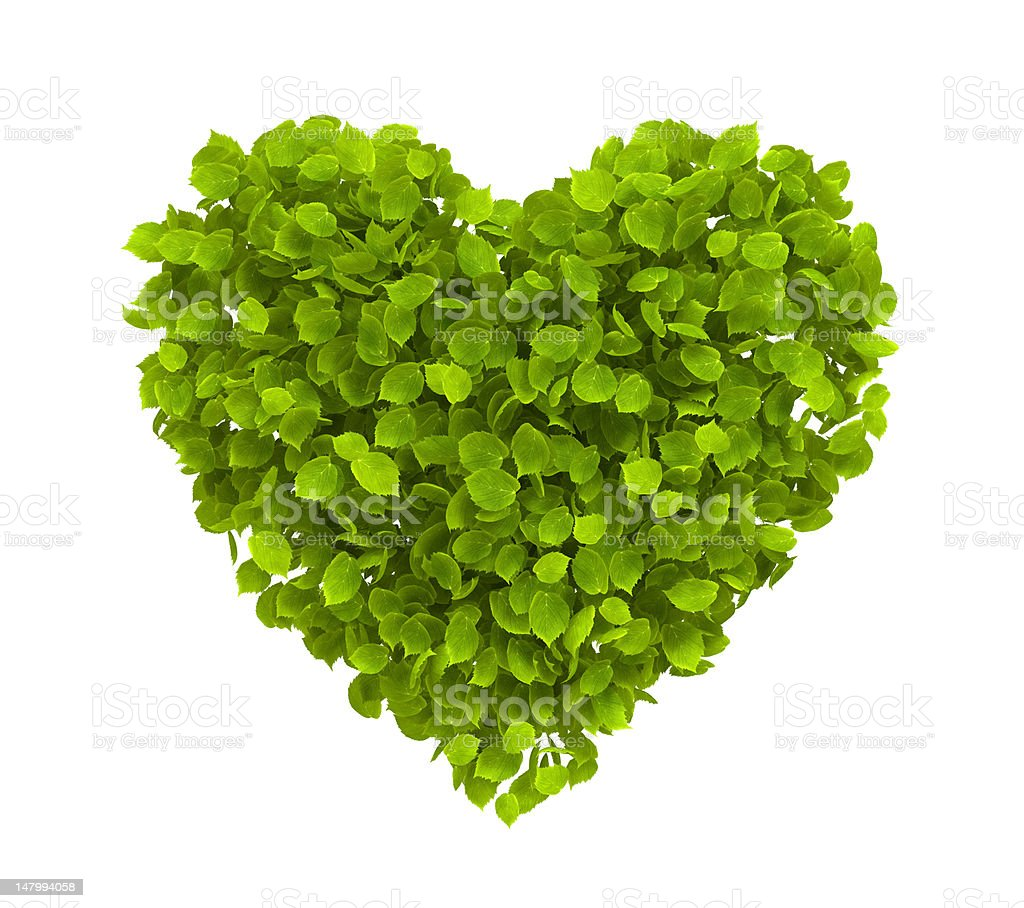 Heart made of green leaves on white background stock photo
