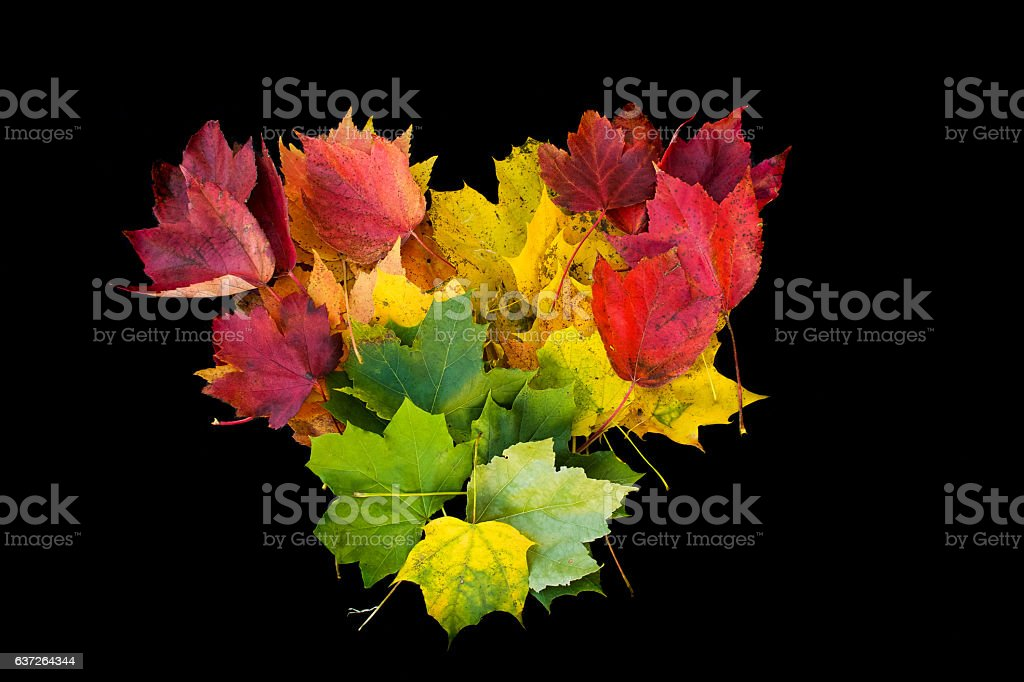 heart made out of autumn leaves – Foto
