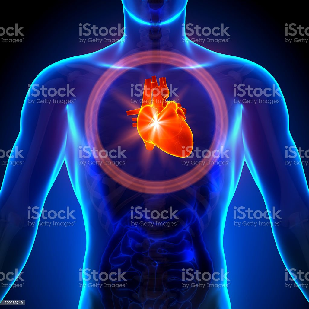 Heart - Male anatomy of human organs - x-ray view stock photo