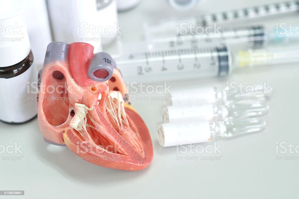 heart model and medical laboratory stock photo