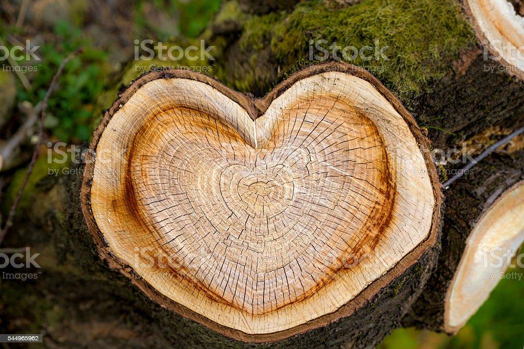 Herzen von Baum – Foto