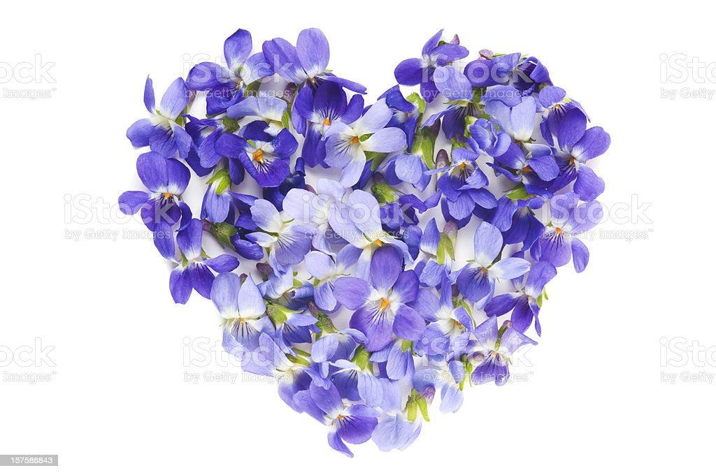 Heart Of Violet Flowers On White Background stock photo