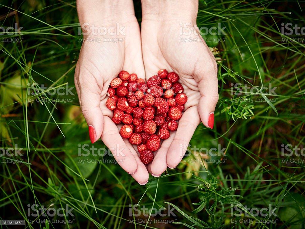 Heart of wild strawberries stock photo