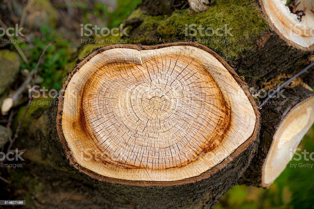 Herz auf Baum – Foto