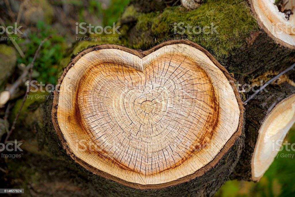 Heart on tree stock photo