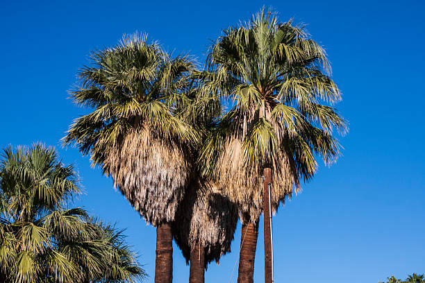 I heart Palm Springs stock photo
