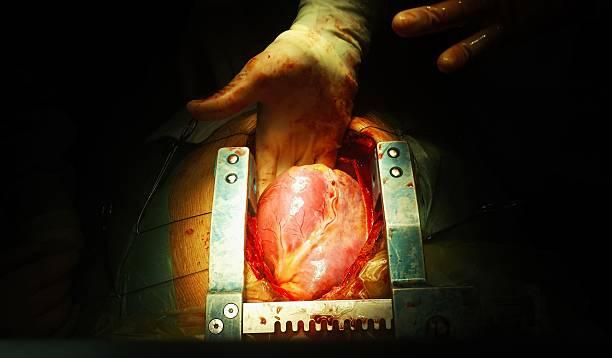 cœur - sternum photos et images de collection