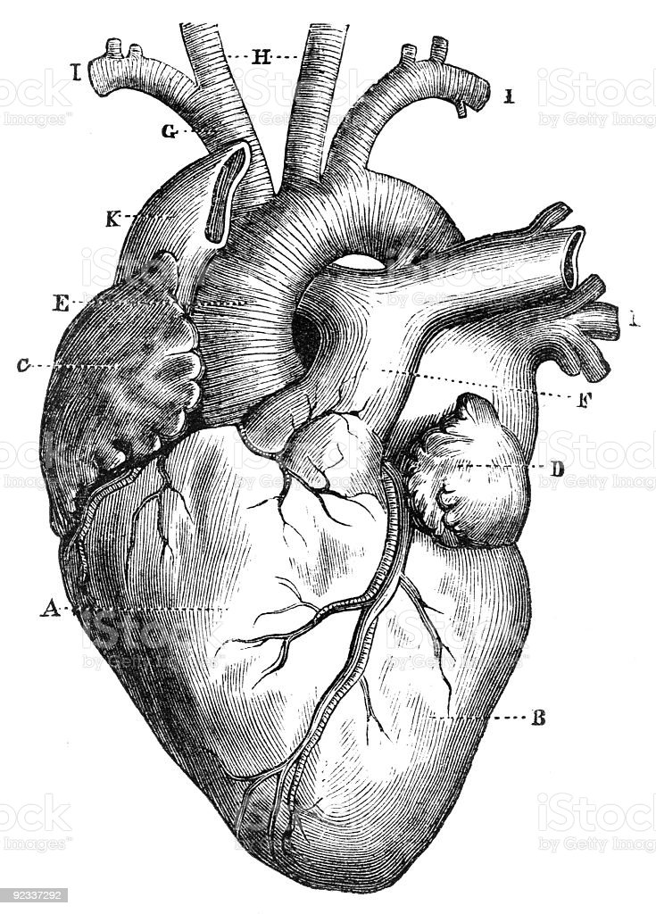 Anatomical Heart Vintage Diagram - Automotive Block Diagram •