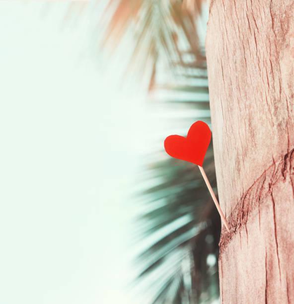 herz merken auf palme, himmel & palm leaf hintergrund, strand pastell getönt - herz zitate stock-fotos und bilder