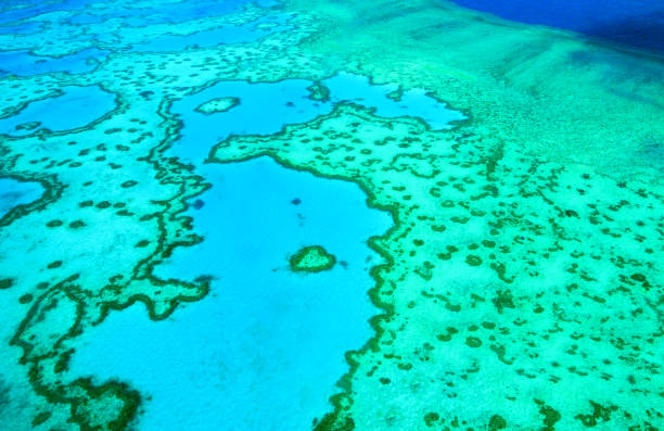 heart reef, great barrier reef, australia - great barrier reef marine park stock pictures, royalty-free photos & images