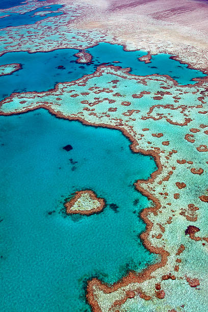 heart reef - great barrier reef stock pictures, royalty-free photos & images