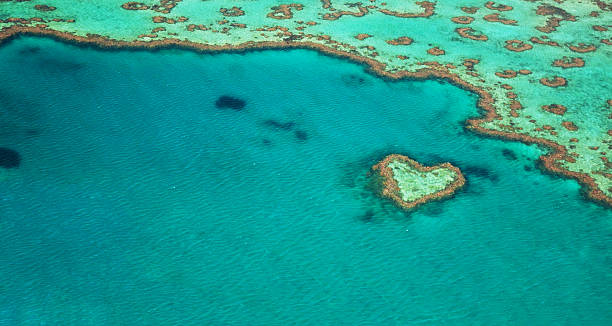 heart reef - great barrier reef marine park stock pictures, royalty-free photos & images