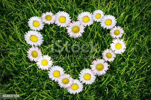 heart shape from daisies in grass