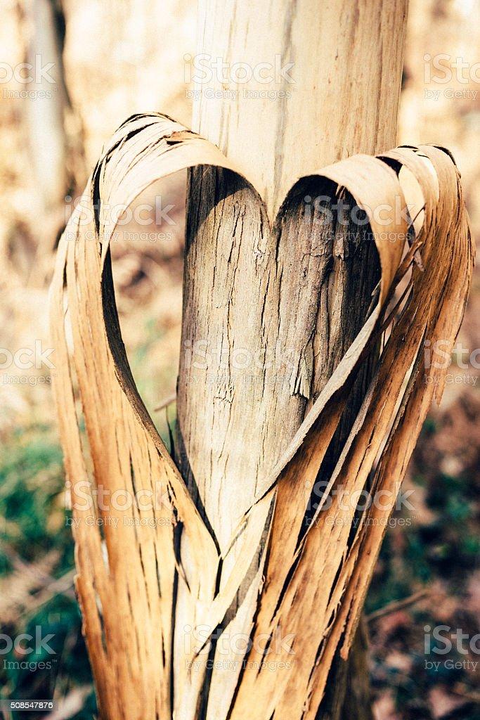 Heart shape in a tree. stock photo