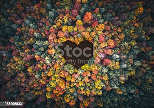 Aerial view on mixed forest in autumn colours with clearing in the shape of a heart.