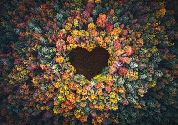 Heart Shape In Autumn Forest stock photo