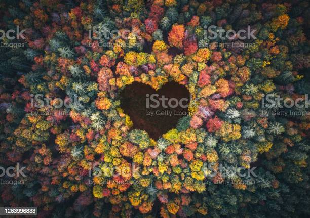 Photo of Heart Shape In Autumn Forest