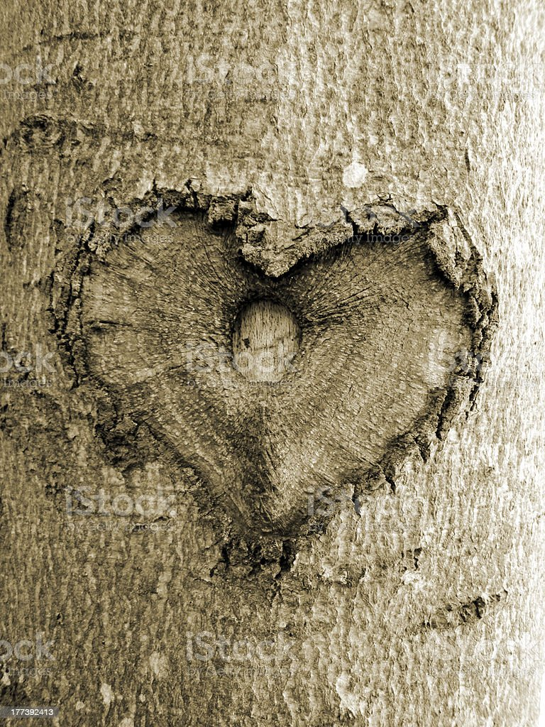 heart shape in the tree, sepia, soft image royalty-free stock photo