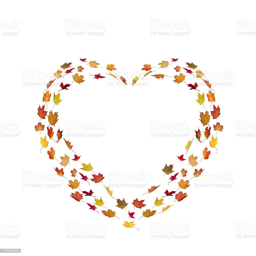 Heart Shape Made By Maple Autumn Leaves stock photo