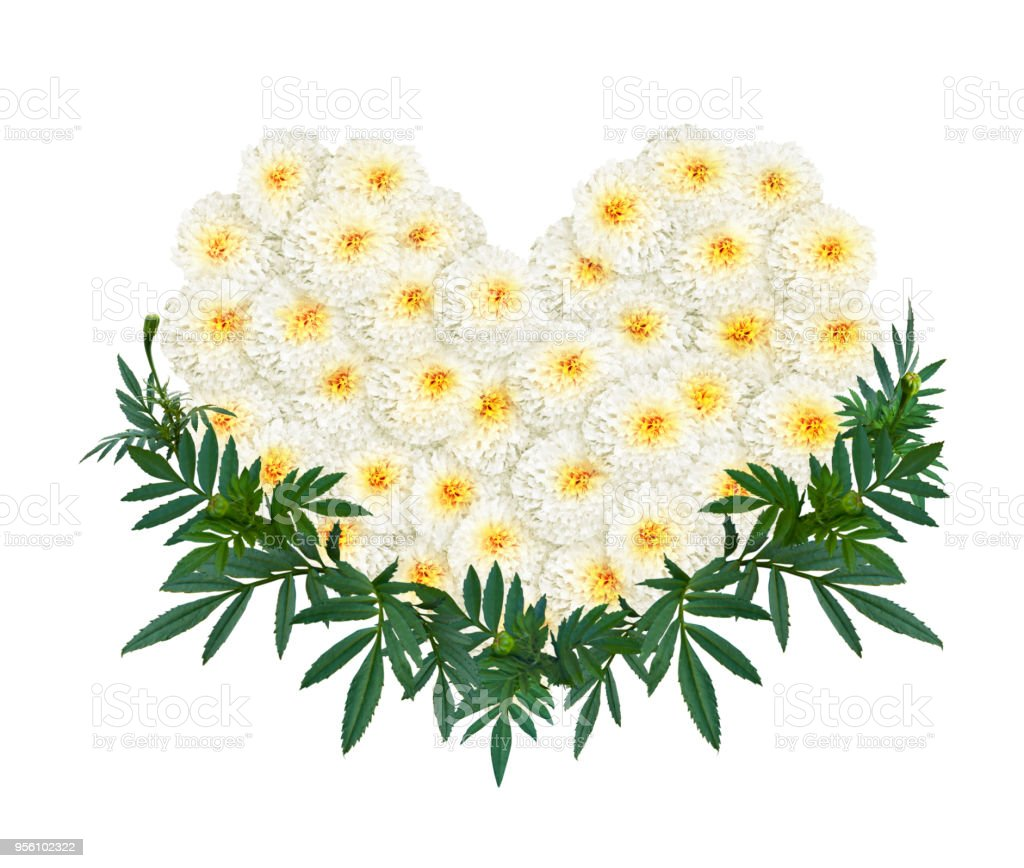 Heart Shape Of White Marigold Or Calendula Flower Stock Photo More