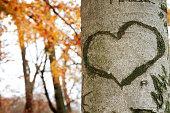 Heart shape marked against tree bark. Unfocused autumnal background. Copy space inside heart