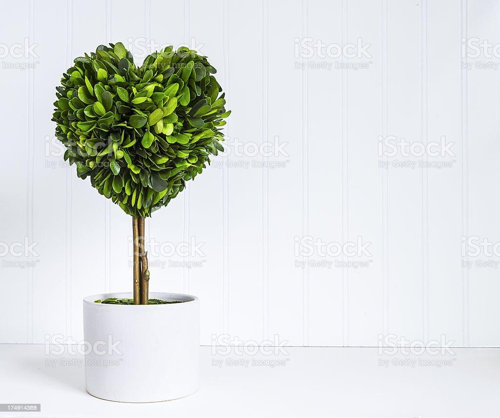 Heart shape topiary stock photo
