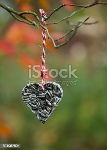 istock Heart shaped bird feeder hanging on the tree. 501062504