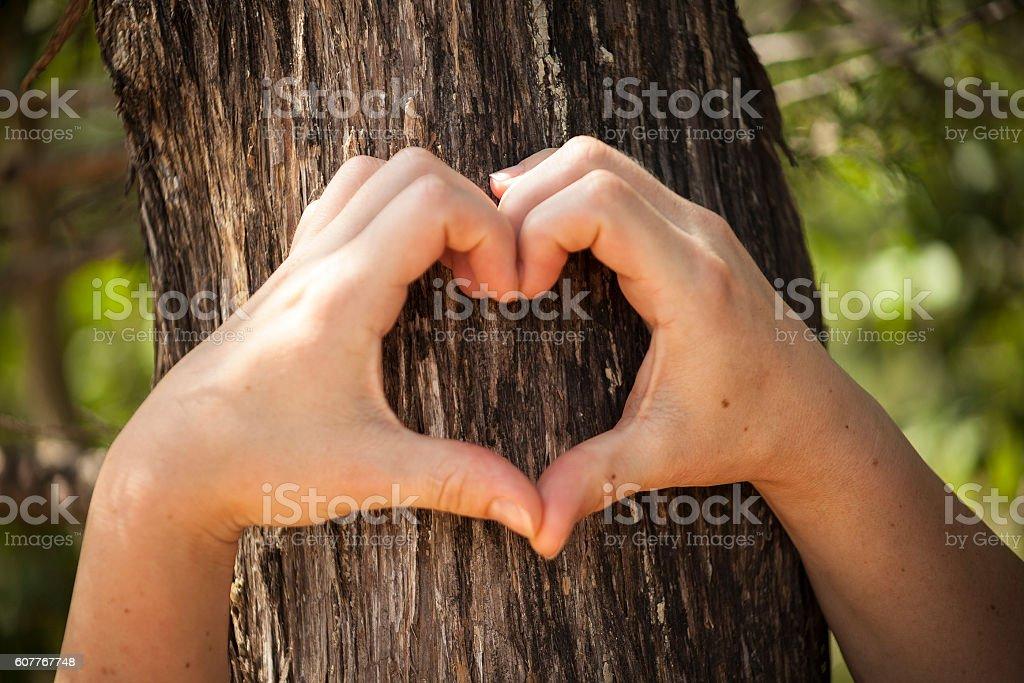 Heart shaped female hands set against bark. stock photo