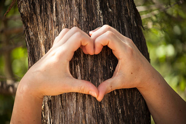 heart shaped female hands set against bark. - tree surgeon stock photos and pictures