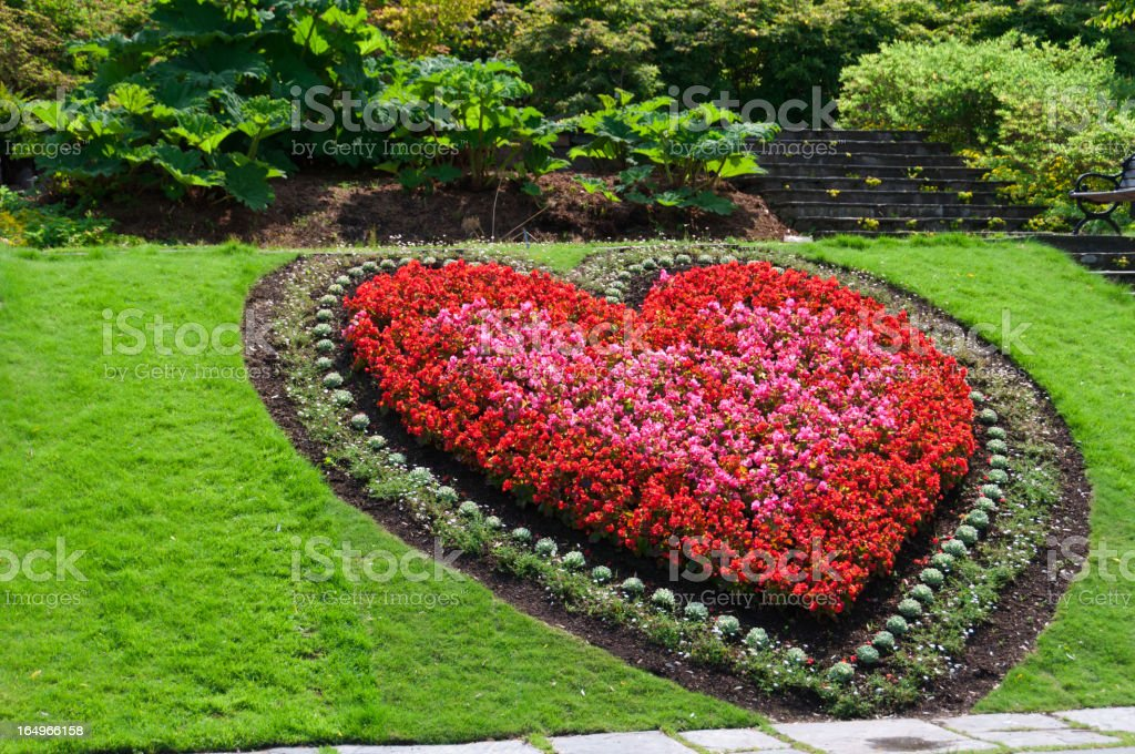 Heart shaped flower bed stock photo more pictures of for Flower bed shapes designs
