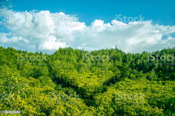 Heart shaped forest and free copy space concept valentine day earth picture id1094806484?b=1&k=6&m=1094806484&s=612x612&h=dtqlcl 7ckqegwnhixl qusq wiz7zfc6 mma8a2jf0=