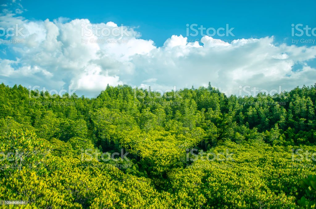 Heart shaped forest and free copy space. Concept Valentine day, Earth Day. stock photo