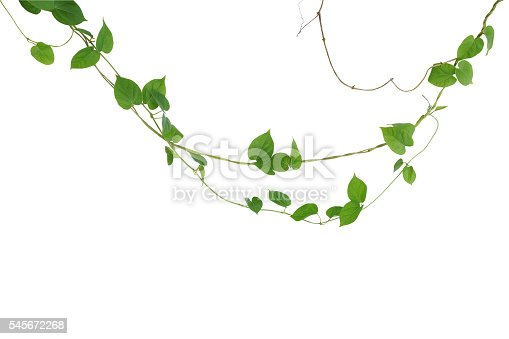 Heart shaped green leaf vines isolated on white background clip heart shaped green leaf vines isolated on white background clip stock photo more pictures of asia istock mightylinksfo