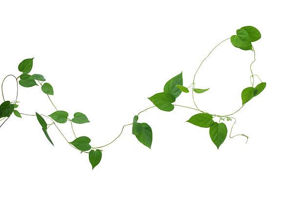 Blumenranke - Bilder und Stockfotos - iStock