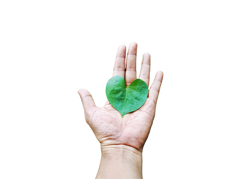 Heart Shaped Leaf On Hand Stock Photo - Download Image Now